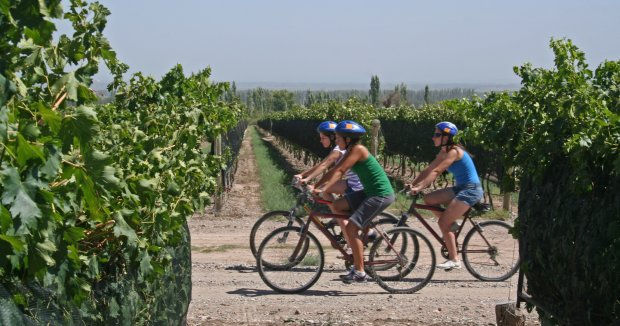 Enoturismo en Bicicleta por la Ribera del Duero