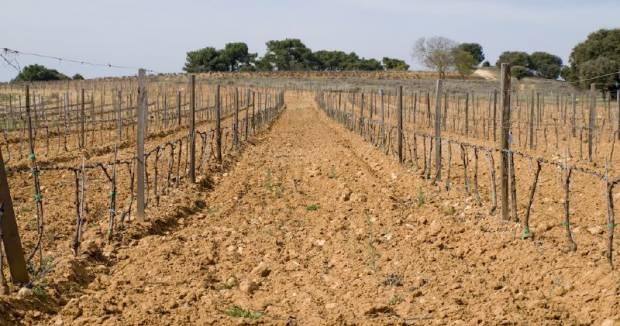 Las Ventas de Vinos Ribera del Duero crecen