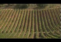 VIDEO PRESENTATION BODEGAS CEPA 21 INGLES