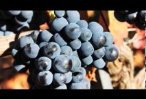Presentación de Bodegas Emilio Moro (video oficial)